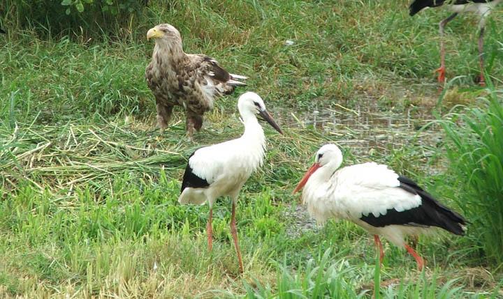 Bagolyvártól a fotólesig - Bővíti szolgáltatásait a hortobágyi Madárpark