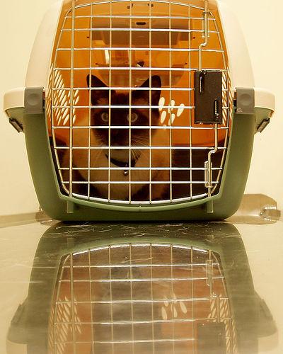 macska, bőrfertőzés, karantén, kezelés