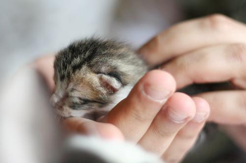 macska, ellés, vajúdás, kismacska, tisztogatás, szoptatás