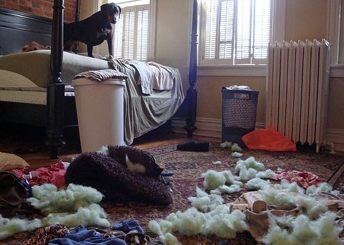 kutya, szeparáció, szorongás, nevelés, pozitív megerősítés, megjutalmazás, kutyakiképzés