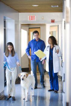 kutya, betegség, védőoltás, állatorvos, kötelező oltás,veszettség