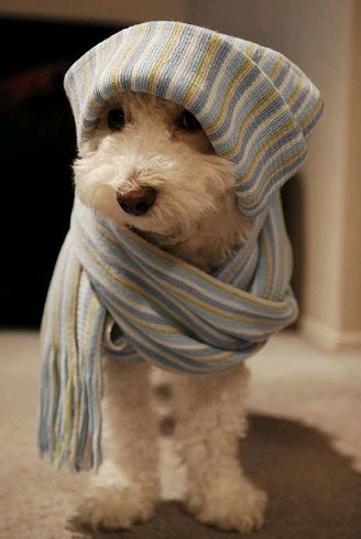 kutya, macska, betegség, gyógyítás, fülatka, kezelés, gyógyszer, állatorvos, fertőzés, gyulladás