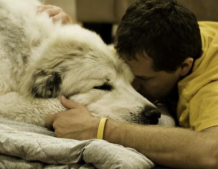 kutya, betegség, veseelégtelenség, kezelés, étrend, állatorvos, megelőzés, tünetek, diagnosztizálás