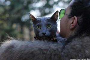 Allergiás vagy a macskaszőrre? Megoldás a hipoallergén macska