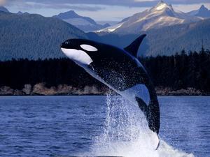 delfin-fajok