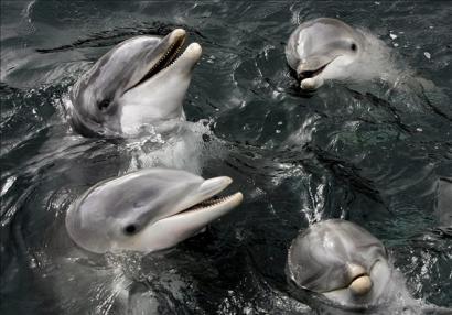 jatekos-delfinek