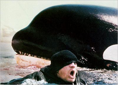 balna, cetfélék, bálnavadász, sziláscet, gyilkos bálna