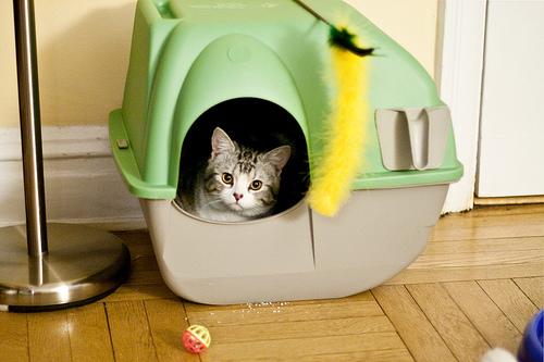 macska, alom, alomtálca, tisztántartása, szaglás, büntetés