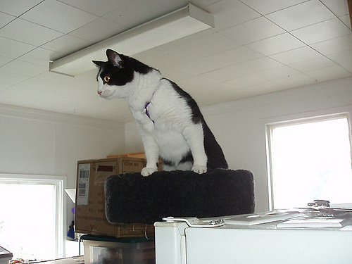 feher-fekete cica