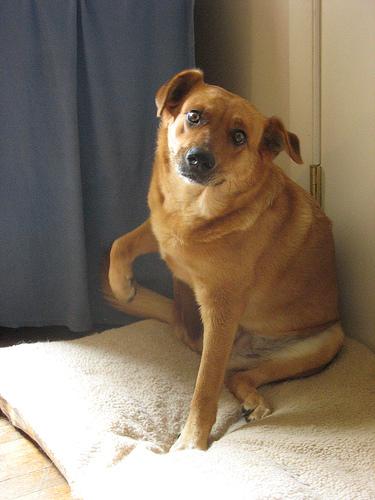 kutya, bolha, bolhariasztó, immunrendszer erősítése, étrend, kovakő, fokhagyma