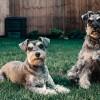 Természetes bolhariasztó kutyáknak