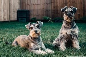 3 természetes bolhariasztó kutyáknak