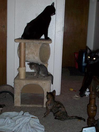 macska, játék, jutalomfalat, kaparófa, cica torony, macskamenta