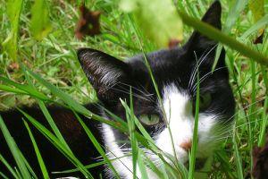 Hogyan szerezhetsz örömöt a cicádnak?