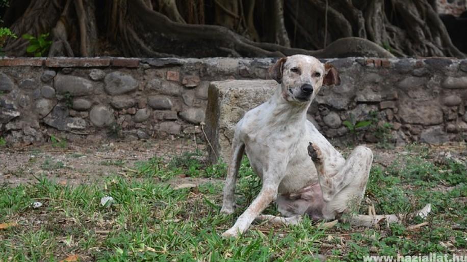 Kutyák: gyakori bőrbetegségek és  azok természetes gyógymódjai