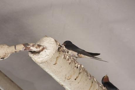 ... pihenő madarak, ...