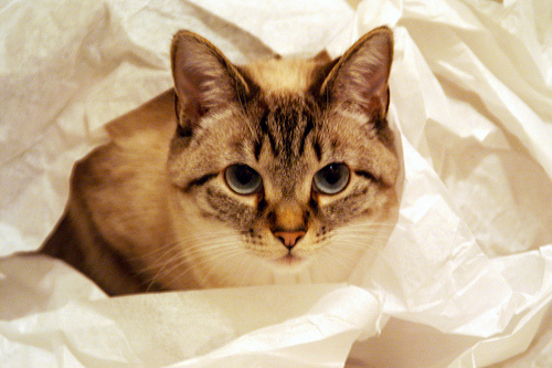 macska, háziállat, bánásmód, körülmények, alomtálca, gondozás, állatorvos, betegség