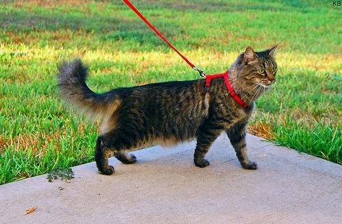 cica-kepek-macska-porazon