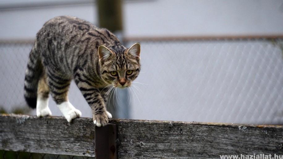 Hol tartsuk a macskát? Kint vagy bent?