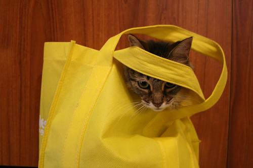 macska, beltér, környezet, játék, kaparófa, macskamenta