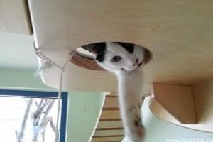 Szobacicák, avagy milyen egy macskának a bentlakás?