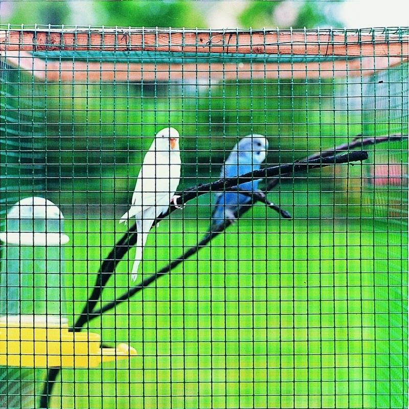 papagájok a kennelben