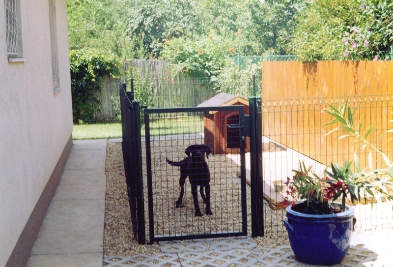 kutya a kennelben