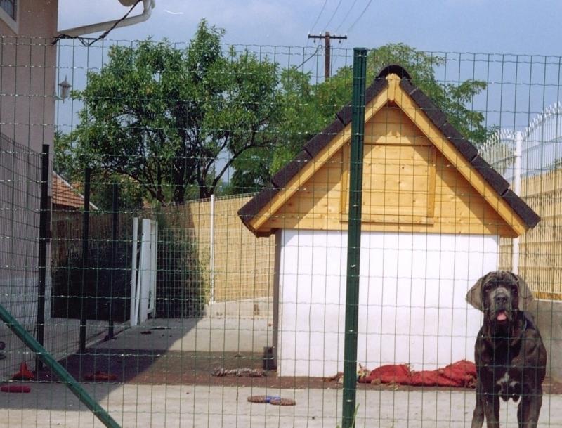 kennel házzal és kifutóval