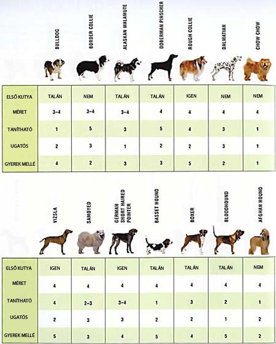 Milyen kutya való neked?