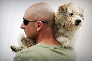 Milyen kutyafajtát válasszak?