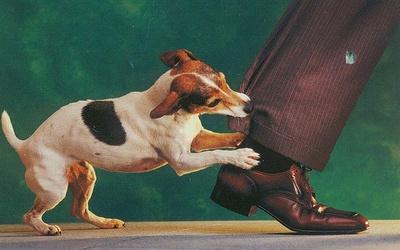 feltekeny-kutya