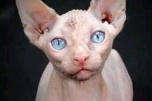Nemzetközi Macskakiállítás és Kisállat vásár októberben!