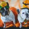 Miért utálják a kutyák a Halloweent?