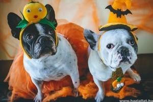 Ezért utálják a kutyák a Halloweent