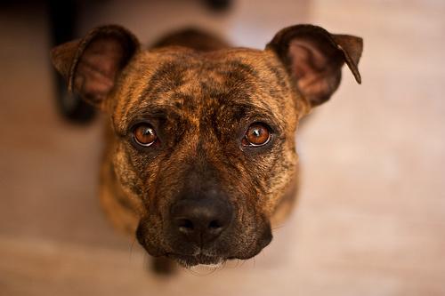 konyorgo-kutya_width