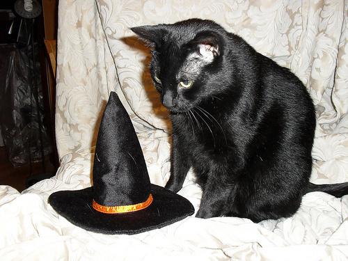 boszorkany-macska
