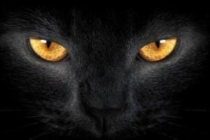 Az ördög macskája boszorkánnyá változik