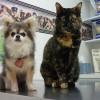 Közlemény az ebek és a macskák védőoltásainak beadásával összefüggő igazolásokról