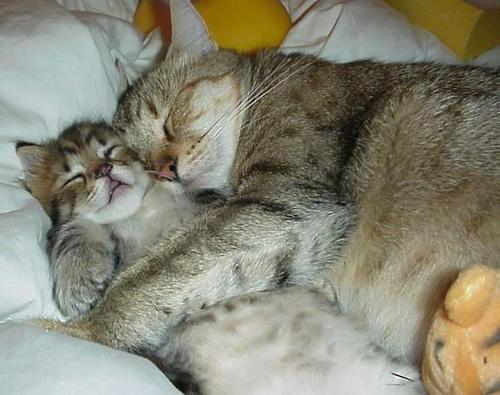 cica-szeretet