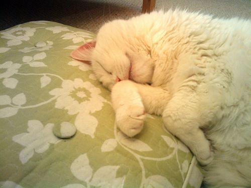 Macskás kép