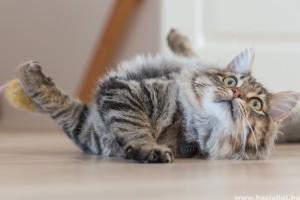 A te cicád bátor vagy félénk? - vicces videóval