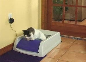 legjobb-macskaalom