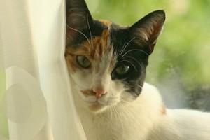 Etológia: a képmutató, energikus macska