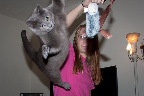 ugro-macska