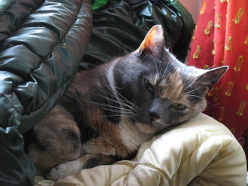 szomoru-cica