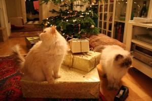 Etológia: a kíváncsi macska