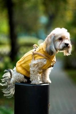 kutyafelszereles-telire