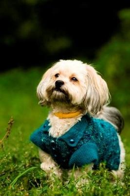 kutya-pulcsi