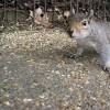 Mitől riad el a mókus?