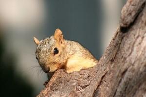 Tudtad, hogy a mókus ...?